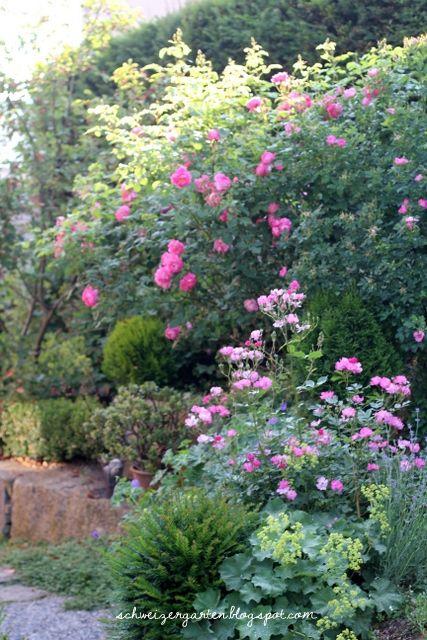 Rosenbogen Modern englische staudenbeete cottage garden buchs formschnitt