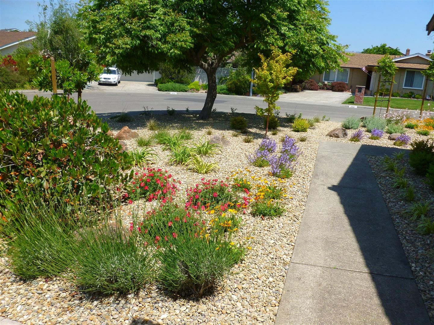 Low Maintenance Front Yard Ideas Part - 34: Low+Maintenance+Front+Yard+Landscaping | Completed Project Petaluma » Front  Yard