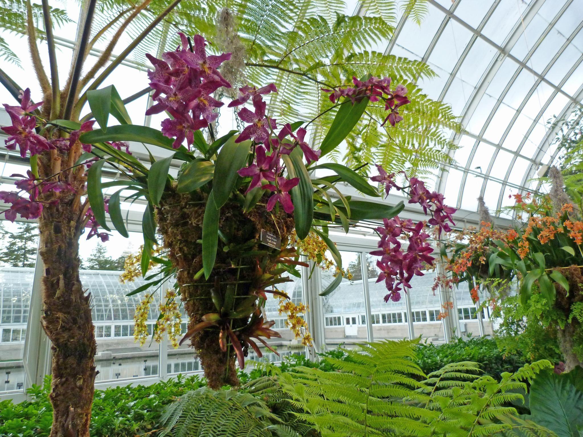 La Exposición de orquídeas en el Jardín Botánico de Nueva York | Jardinería Fine