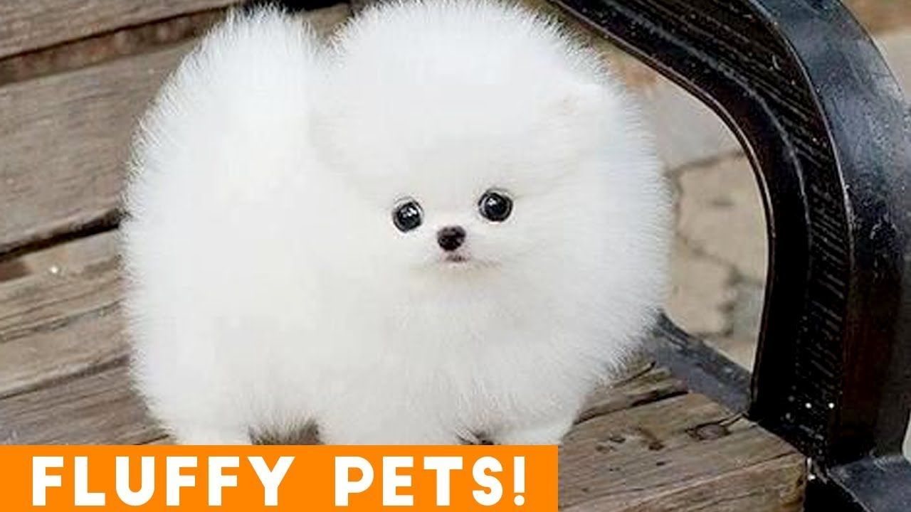 Cutest Fluffy Pets Ever 2018 Funny