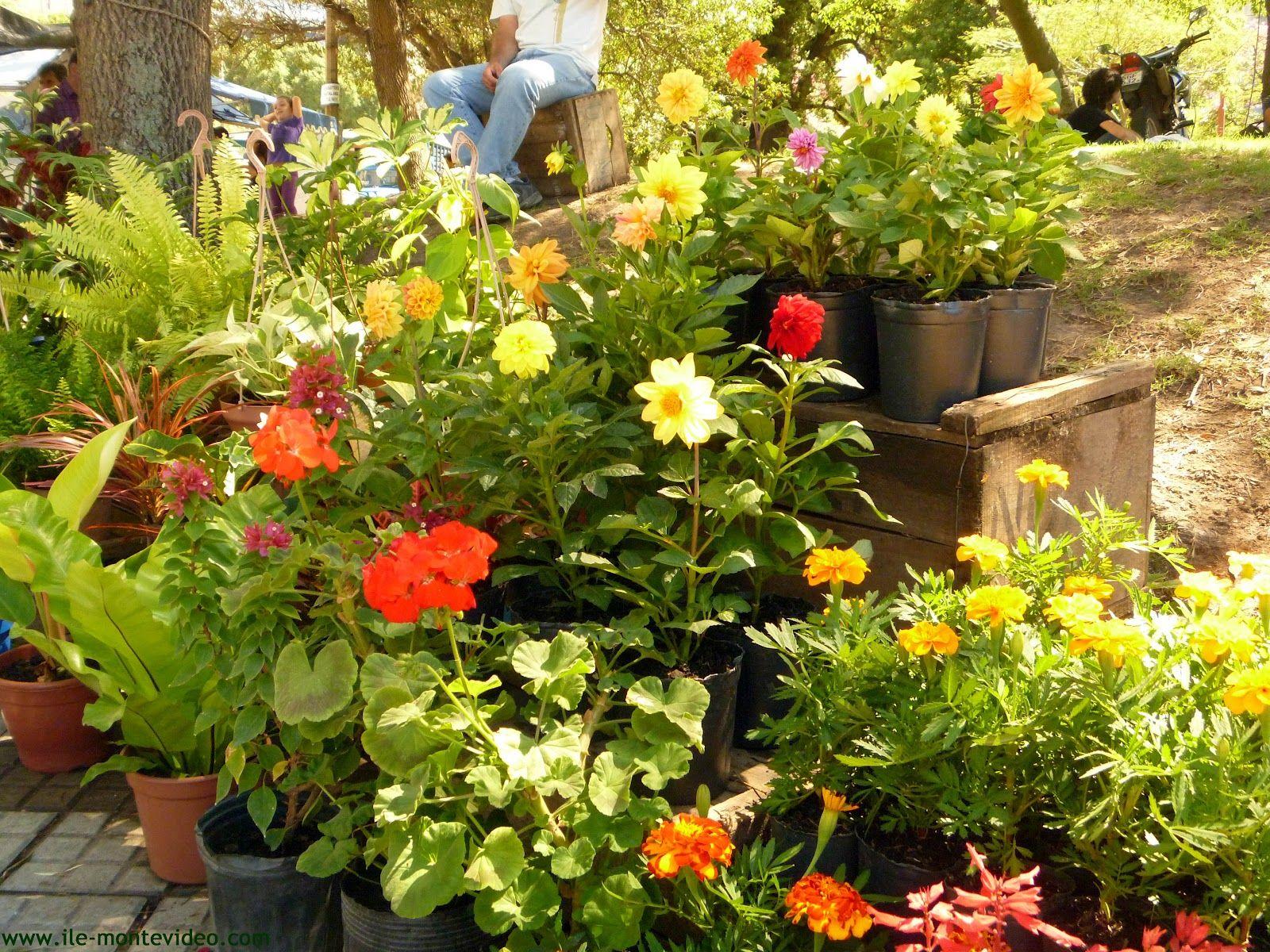 Como dise ar el jard n con macetas de diferentes formas for Disenar jardines