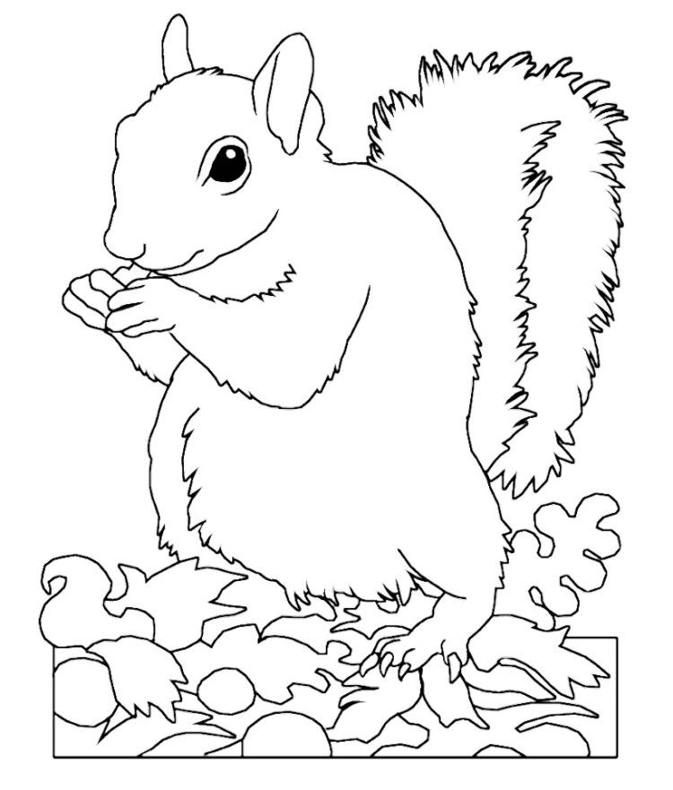 Animal Squirrel Coloring Pages | Pattern Design Ideas | Pinterest ...