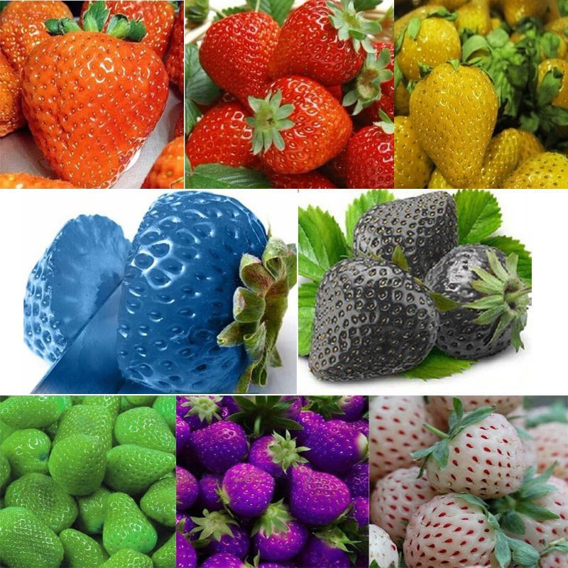 100 PCS Wholesale New Strawberry Seeds Nutritious
