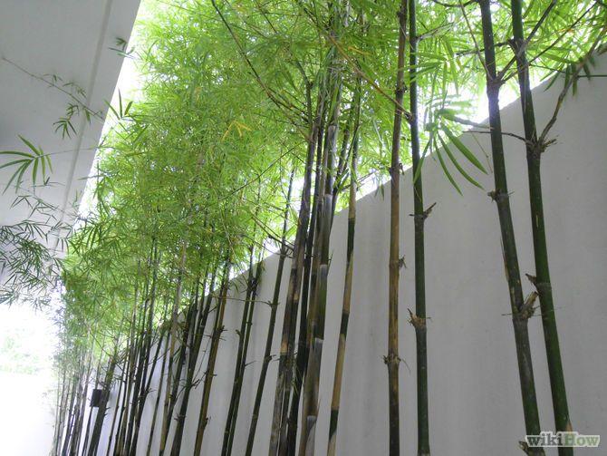 670px water bamboo step 670 503 jard n - Jardineras con bambu ...