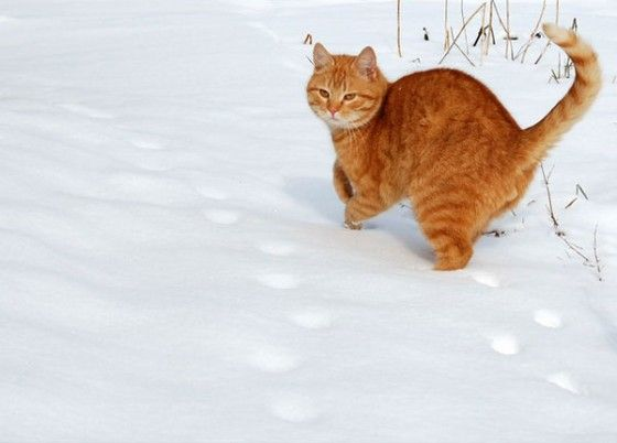 cute red cat in the snow