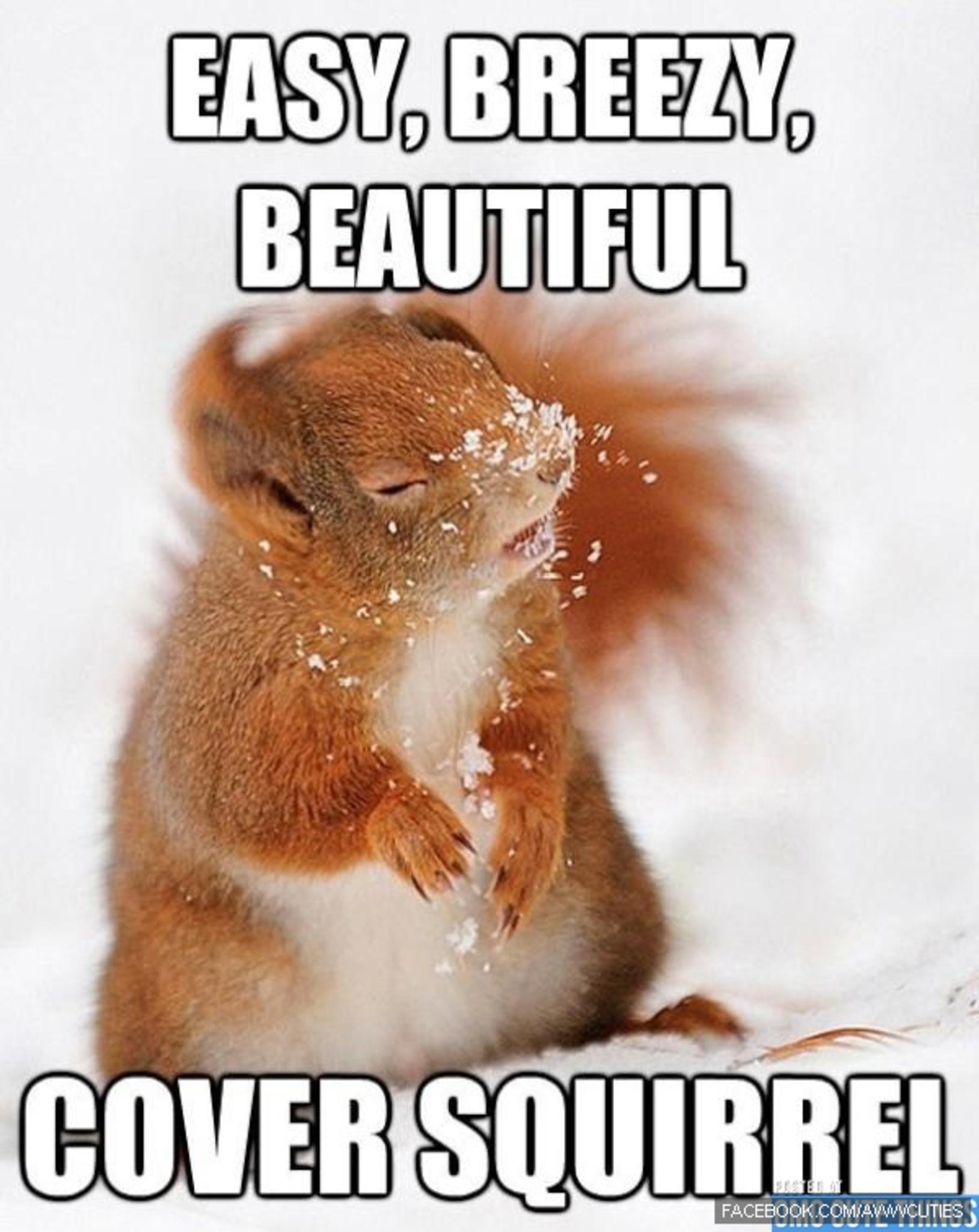 0ee53e8023c532c24ba56cd1dd1ce310 easy, breezy, beautiful cover squirel cover girl meme parody