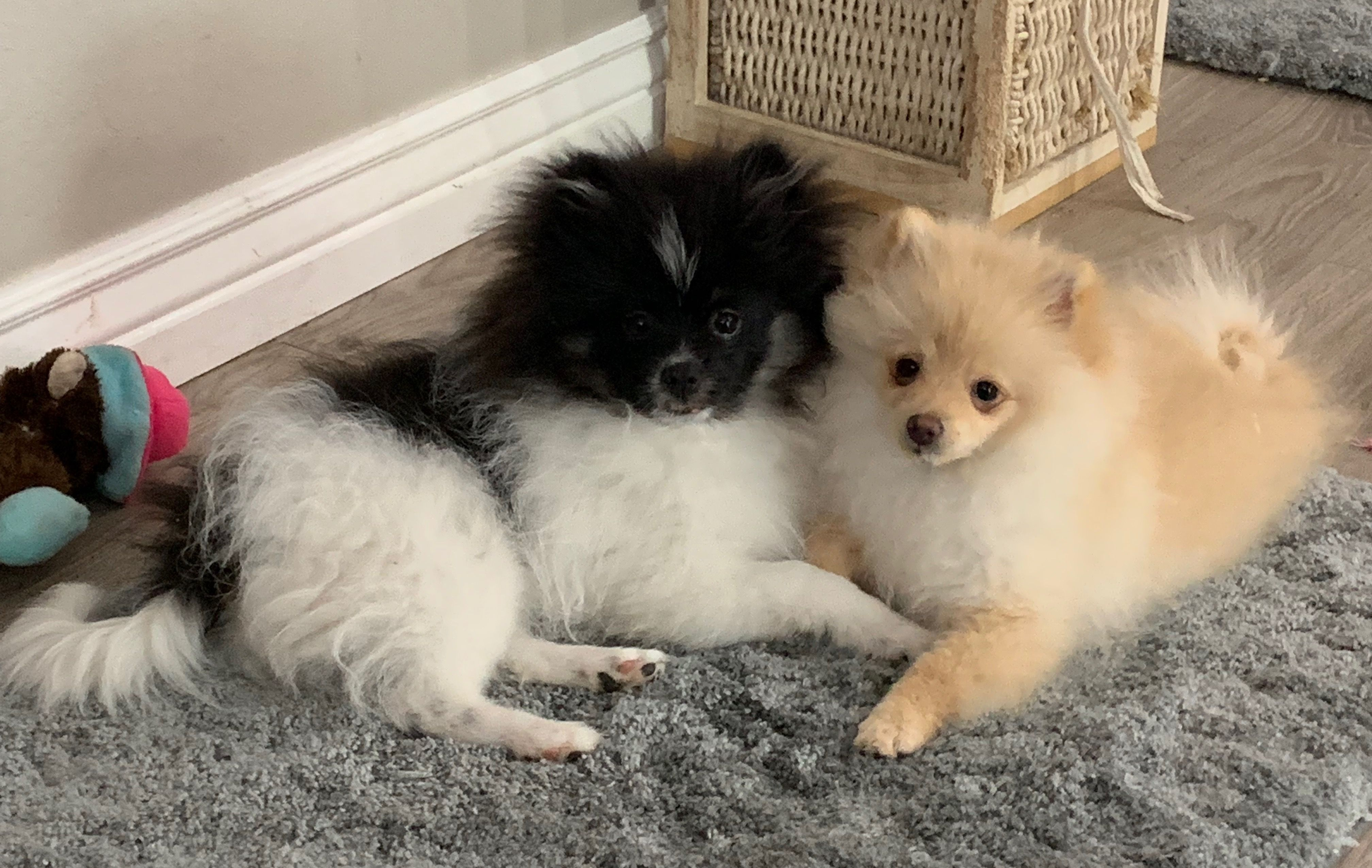 Bentley and Bailey 92019 Beautiful dogs, Puppies, Dogs