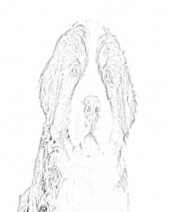 Bernese Mountain Dog Coloring Pages Dog Coloring Page Dog Art Mountain Dogs