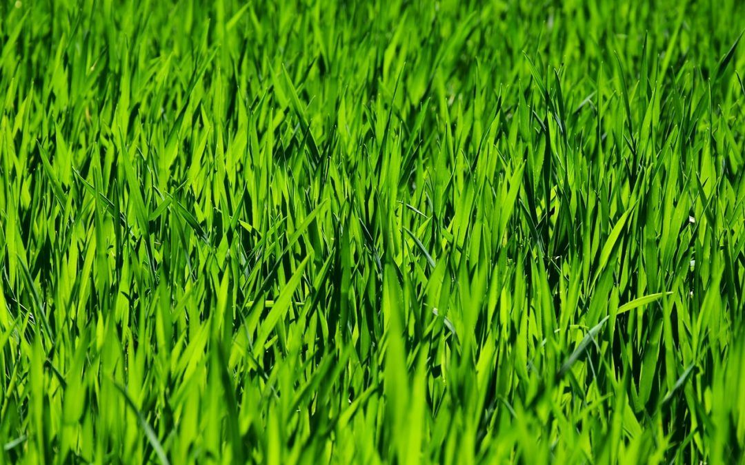Everything You Need to Know about Lawn Aeration Epsom