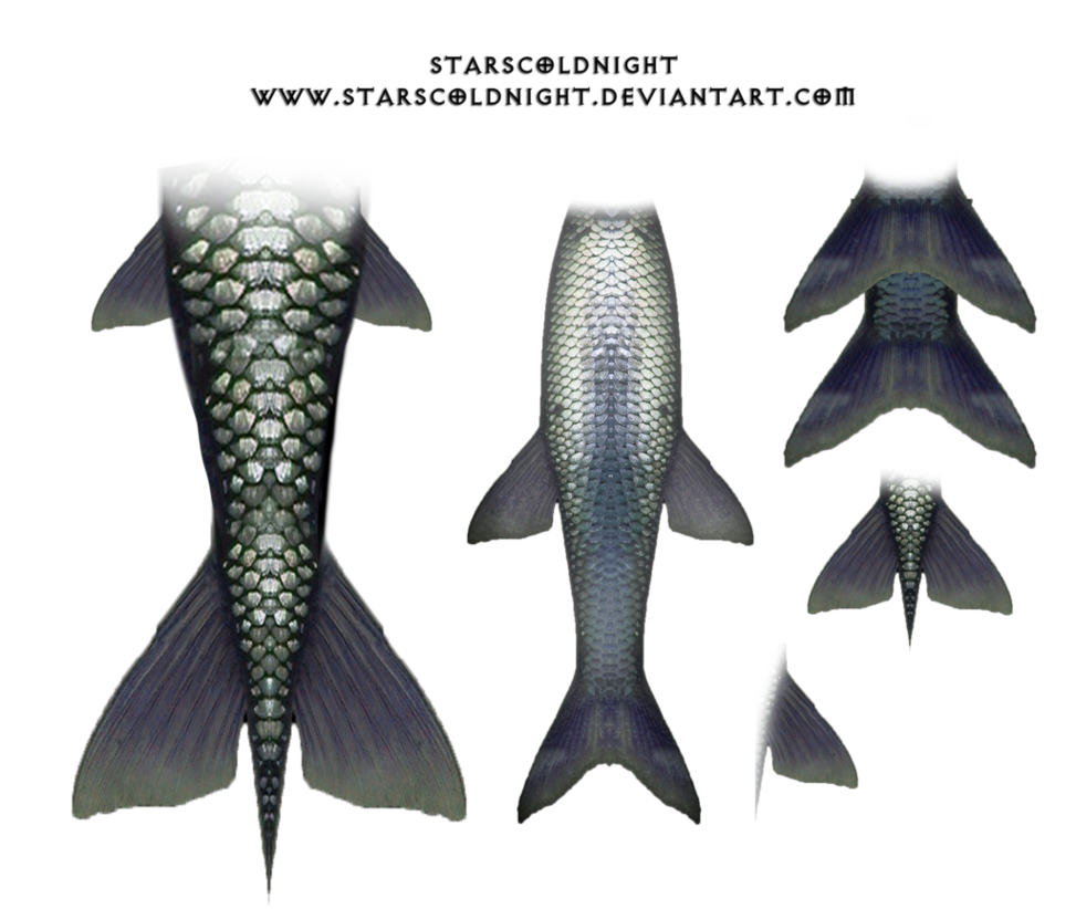 mermaid tail png - Google Search