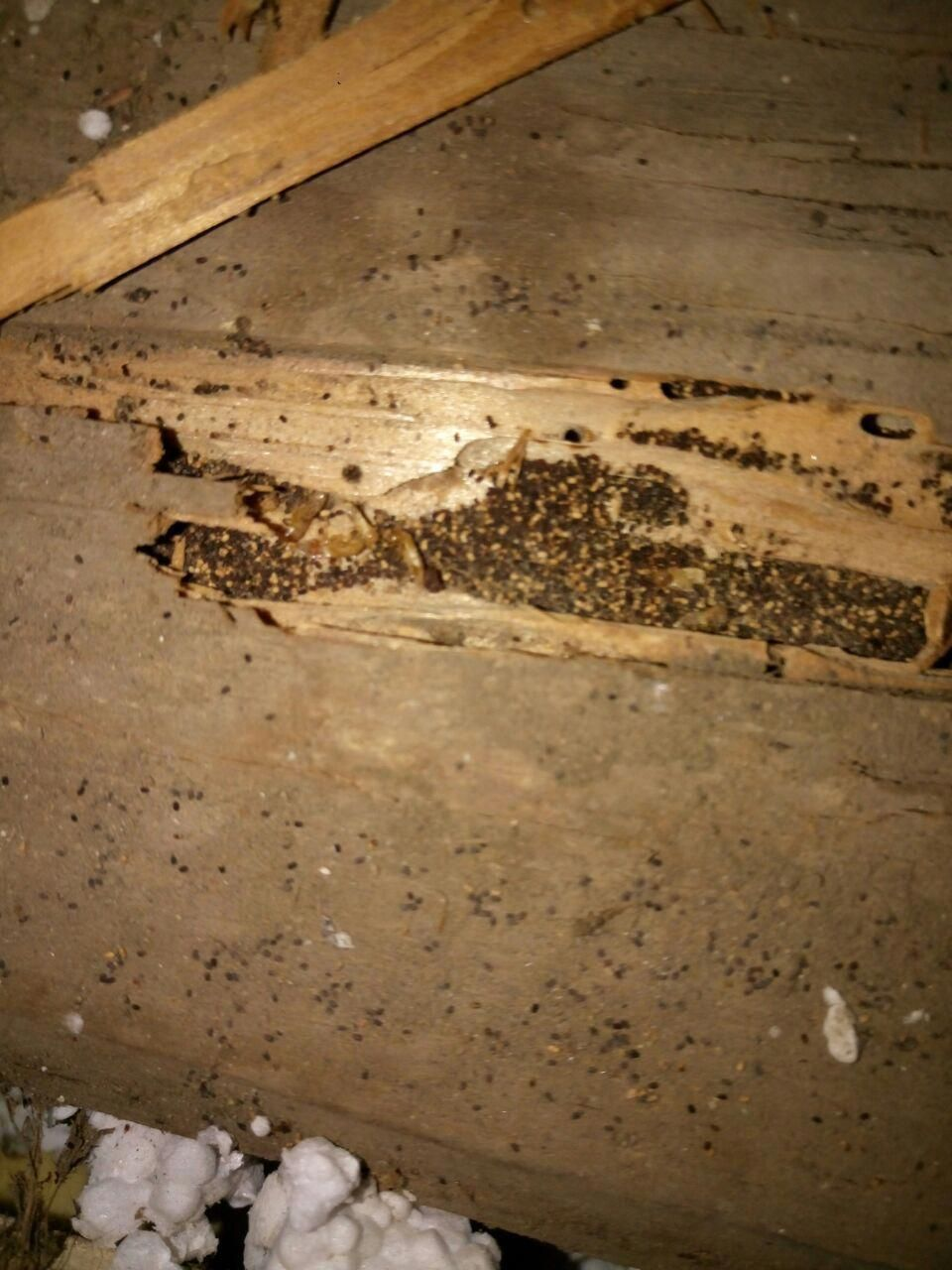 Here You Can See A Location Infested By Drywood Termites Aka Woodborer We Were Able To Enter The Location A Termite Treatment Drywood Termites Termite Control