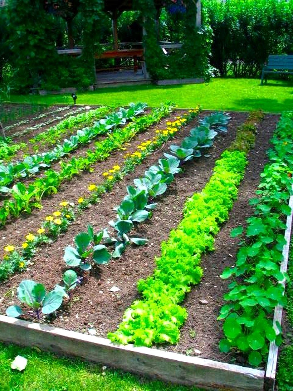 Magnificent Vegetable Garden Ideas Philippines Organic Vegetable