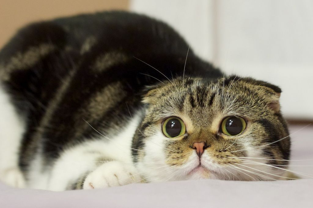 Чистым четвергом, смешной кот картинка фото