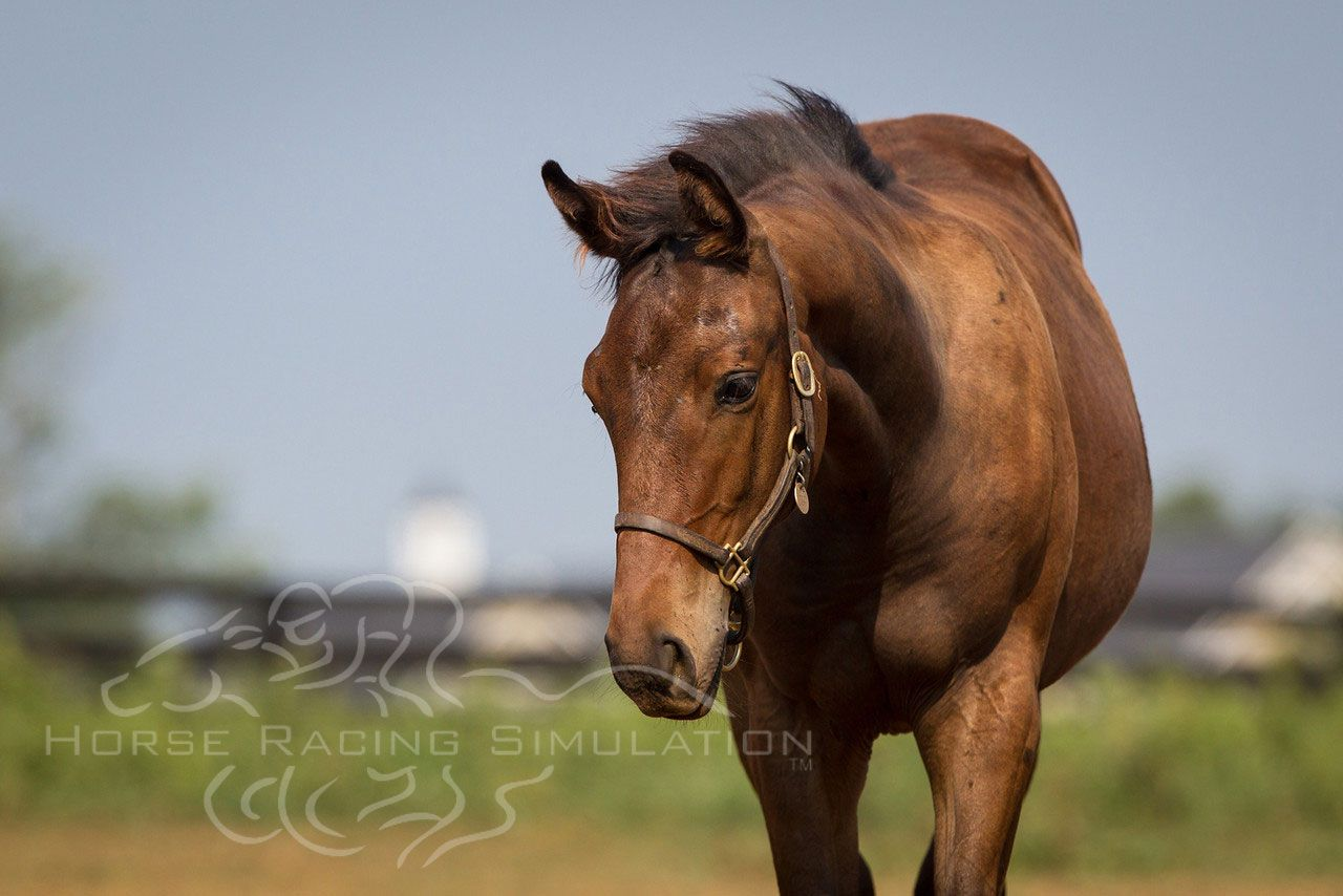 Bernardini's filly looking lovely in this photograph.