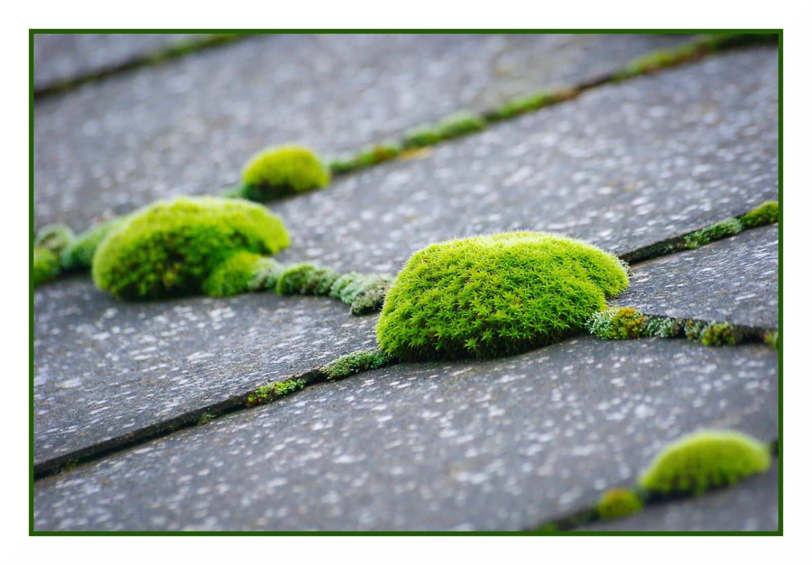 How To Remove Moss From A Roof With Images Roof Maintenance Diy Roofing Roof Repair