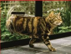 cat door for glass sliding doors - Google Search
