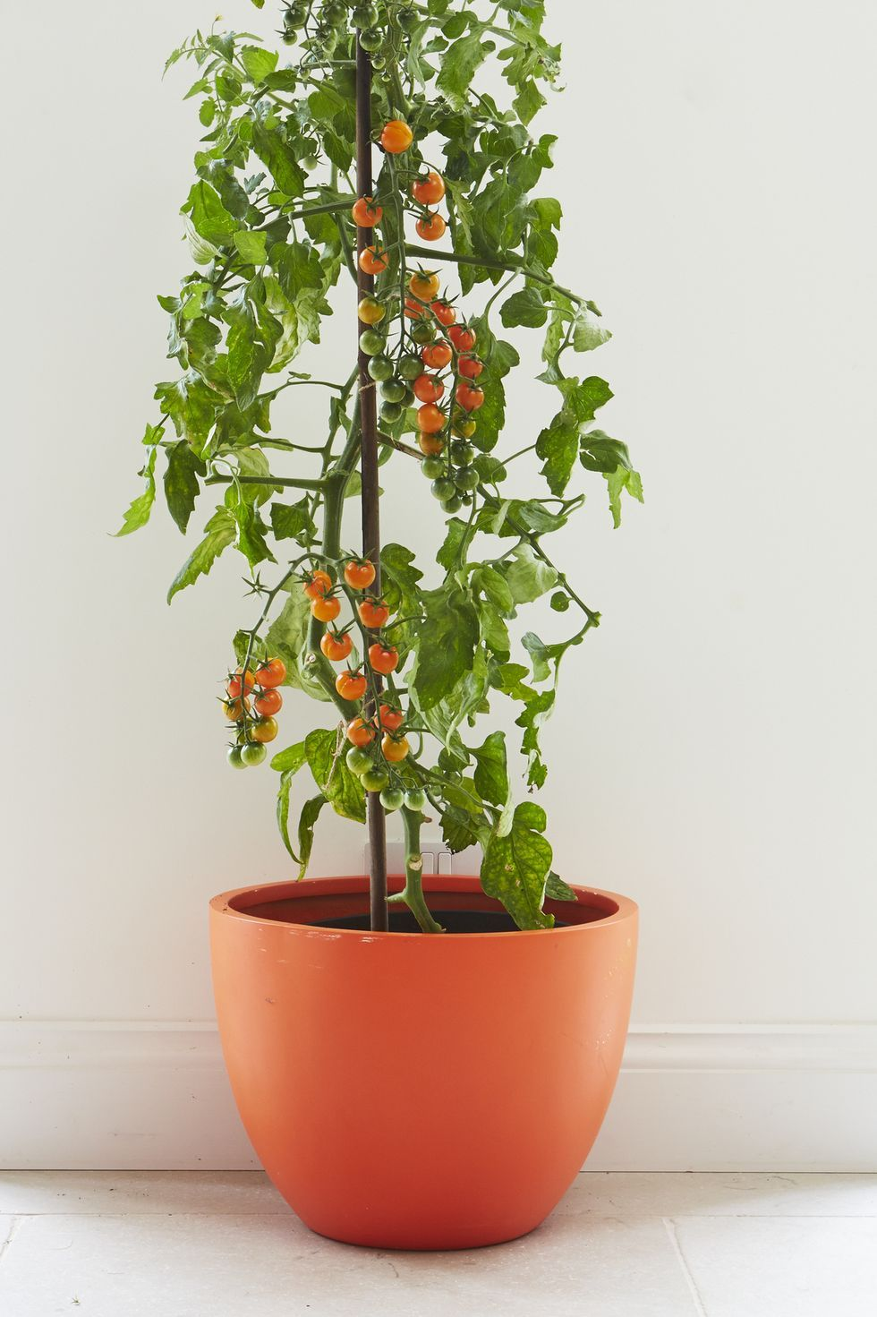 Starting Your Own Indoor Edible Garden Is Easier Than You