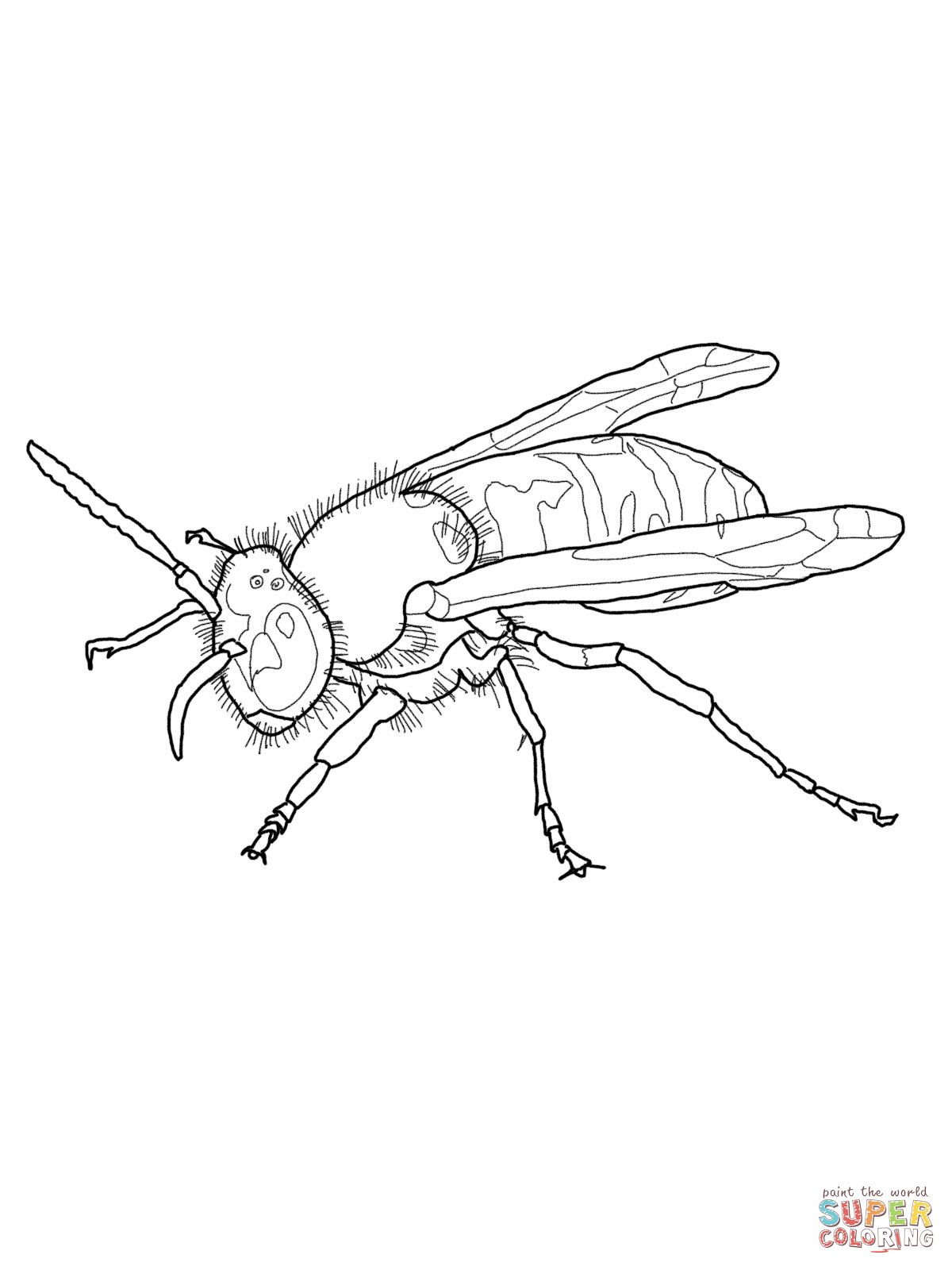 European Wasp Coloring Pages Color Worksheets Free Printable Coloring Pages