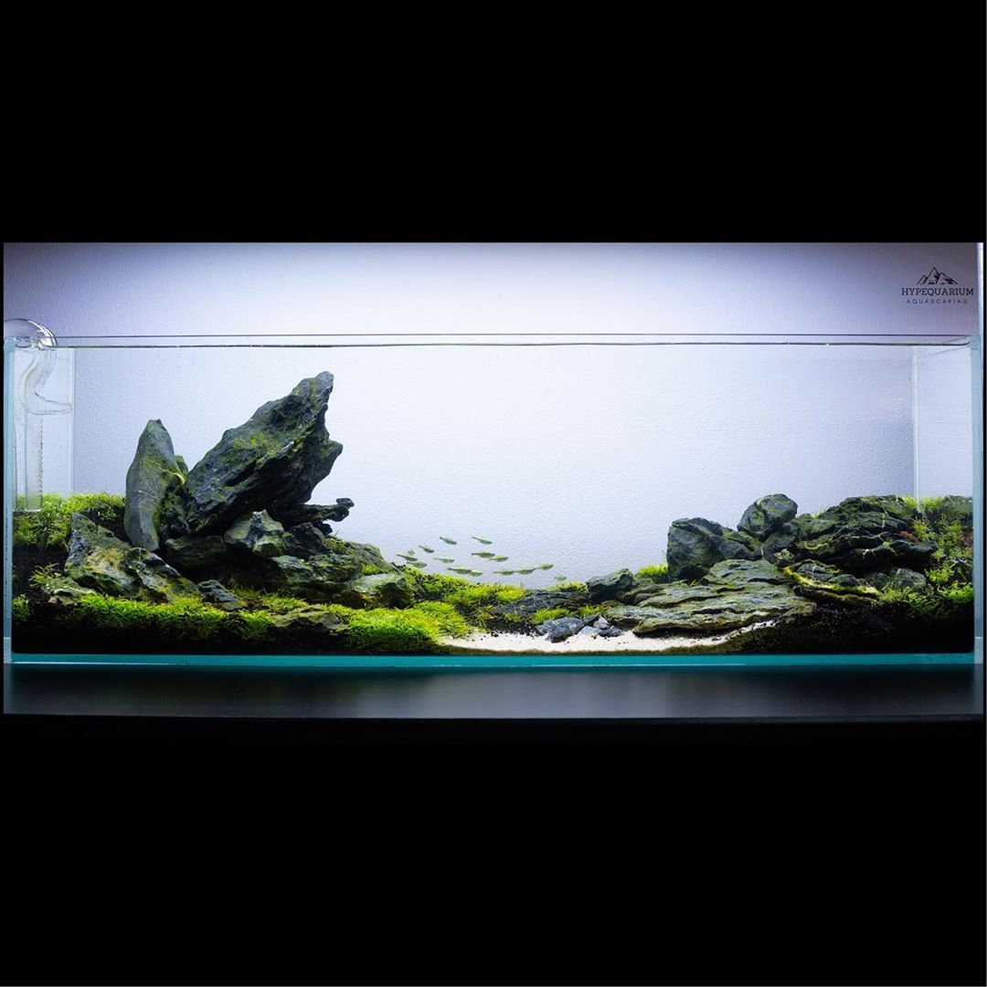 Hypequarium On Instagram 10 Weeks Update Ug Started Acting Like A Proper Plant Finally Need Few Weeks Mo In 2020 Aquascape Aquarium Design Fish Tank