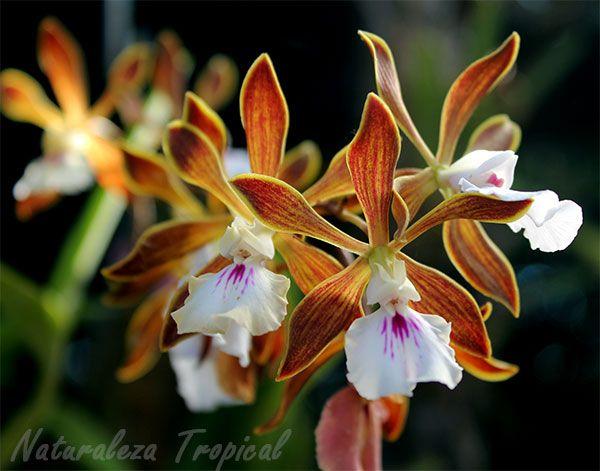C mo llenar nuestro jard n de aromas f cil con estas for Concepto de plantas ornamentales