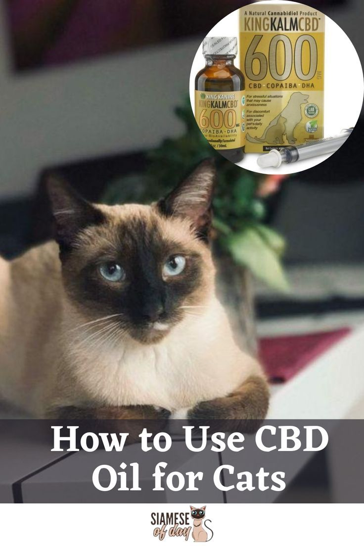 How to Use CBD Oil for Cats in 2020 Cat fleas treatment