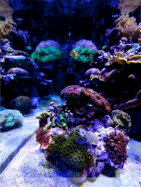Ecoxotic Cannon LED Pendant - Corals | Ecoxotic LED Cannon