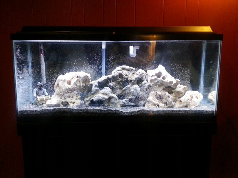 55 gallon african cichlid tank start up north texas for Cichlid fish tank