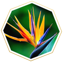 Flower Meanings And Symbolism Ftd Com In 2020 Flower Meanings Paradise Meaning Birds Of Paradise