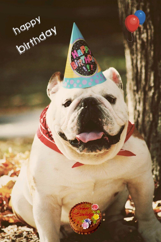 Happy Bully Birthday Happy birthday dog, Happy birthday