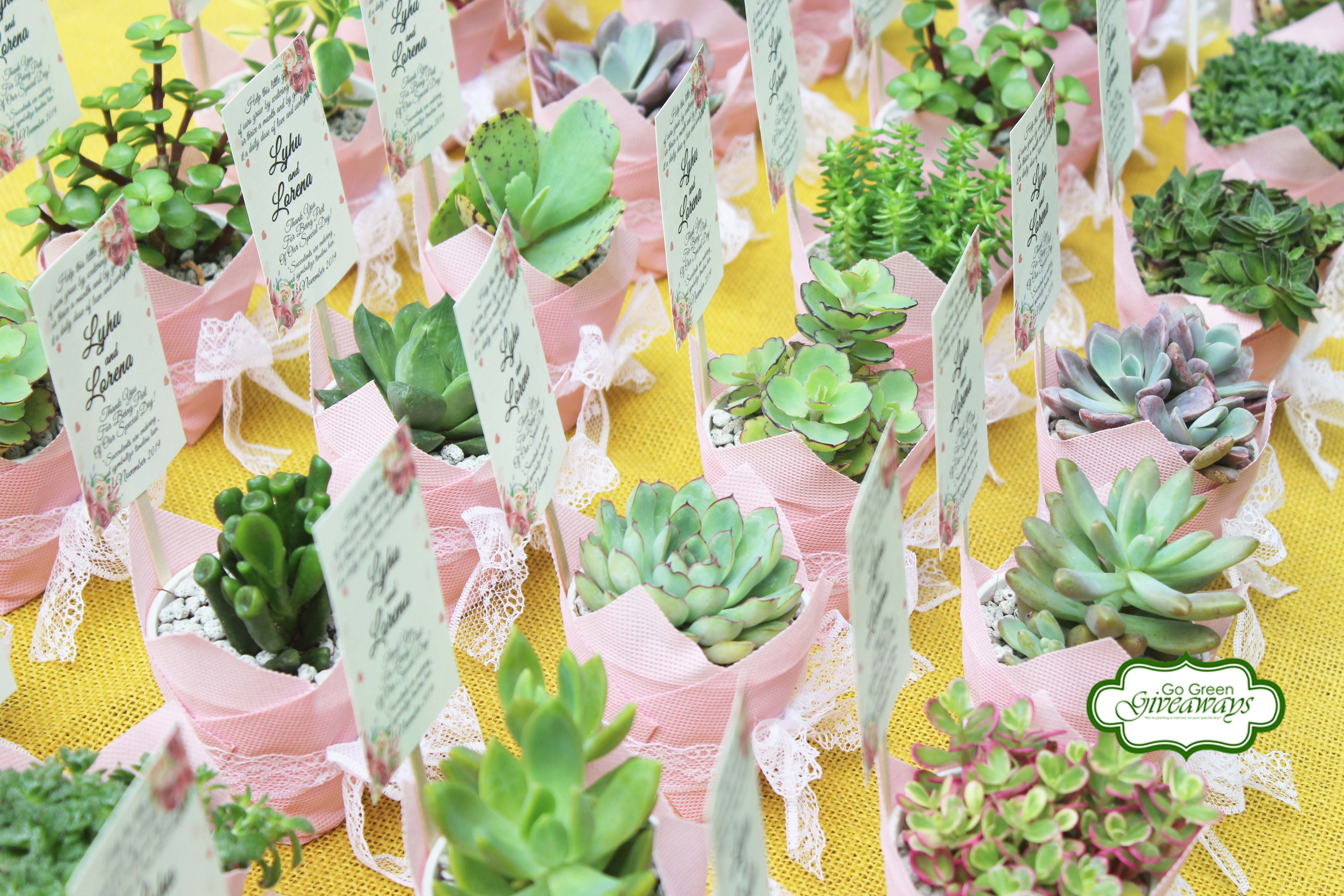 Lyhu & Lorena's succulents wedding favors in 2020