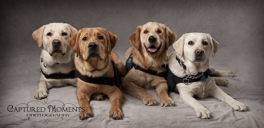 The Fab 4 at your service. Dog photography, Labrador