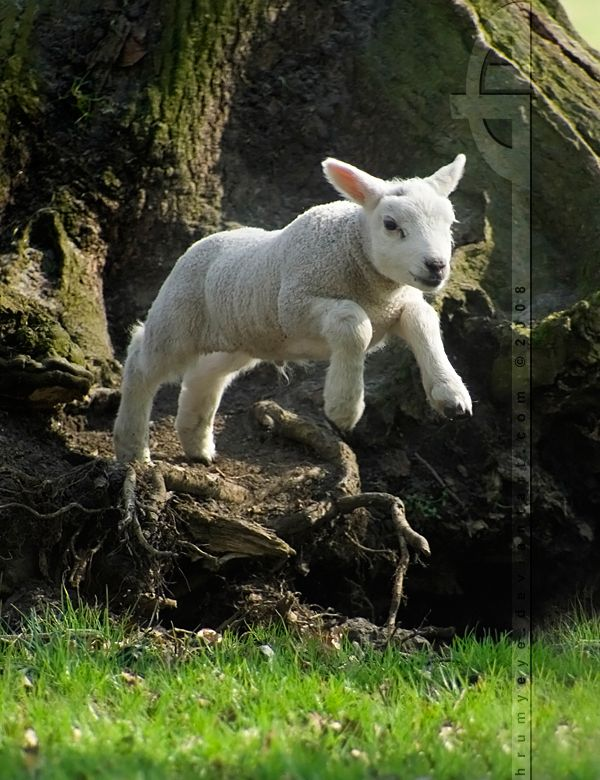 ..an your @ss will follow! Unfortunately I still don't fully master this technique, but hey, if a lamb can do it.... http://thrumyeye.deviantart.com/gallery/?offset=1368