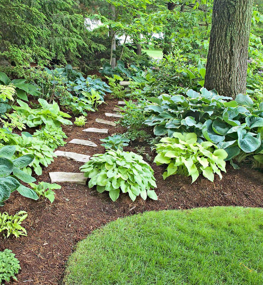 20 Secrets To Landscape Success In 2020 Front Yard Landscaping Shade Garden Landscaping Plants