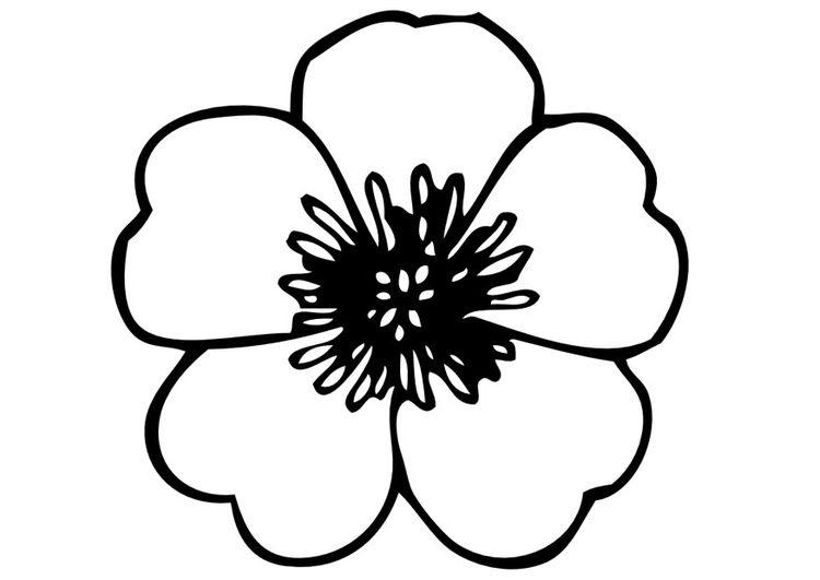 Popular Flowers Coloring Pages Mohn Zeichnung Blumen Zeichnen Blumenzeichnung