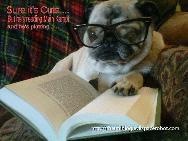 Intellectual Pug Meme Pugs Animal Books Dogs