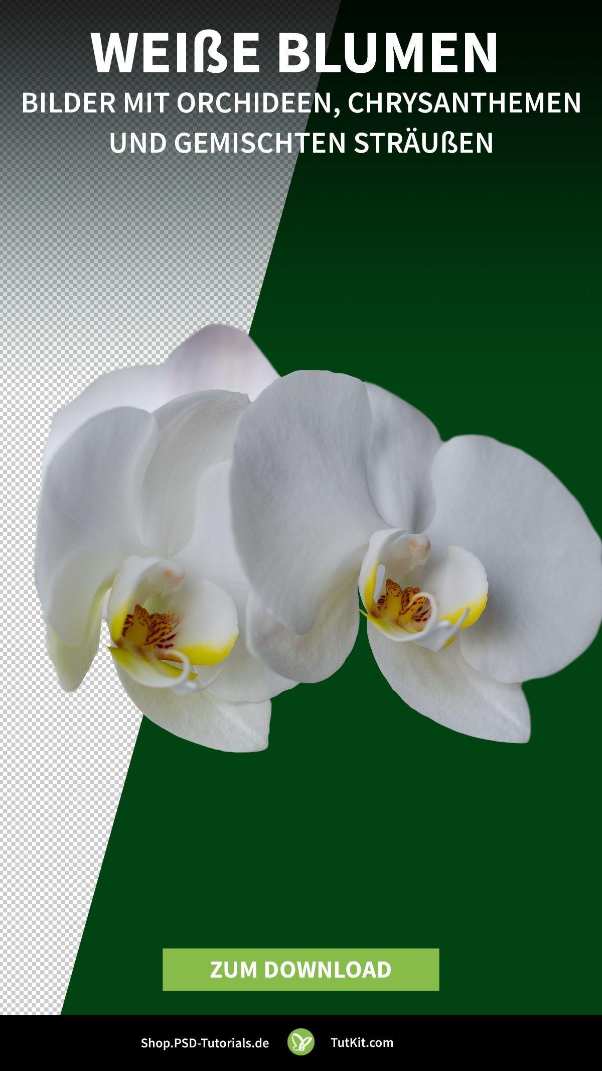 Du erhältst jeweils 10 Bilder mit Orchideen und Chrysanthemen. Dazu gesellen sich weitere 10 Aufnahmen von Sträußen mit weißen Hortensien, Pfingstrosen und Alstromerien. Die Blumenbilder eignen sich zum einen, um in deinen Fotos einzelne Blüten als Zusatzmotiv abzulegen. Zum anderen kannst du damit florale Rahmen erzeugen. #Blume #Orchideen #Chrysanthemen #Flower
