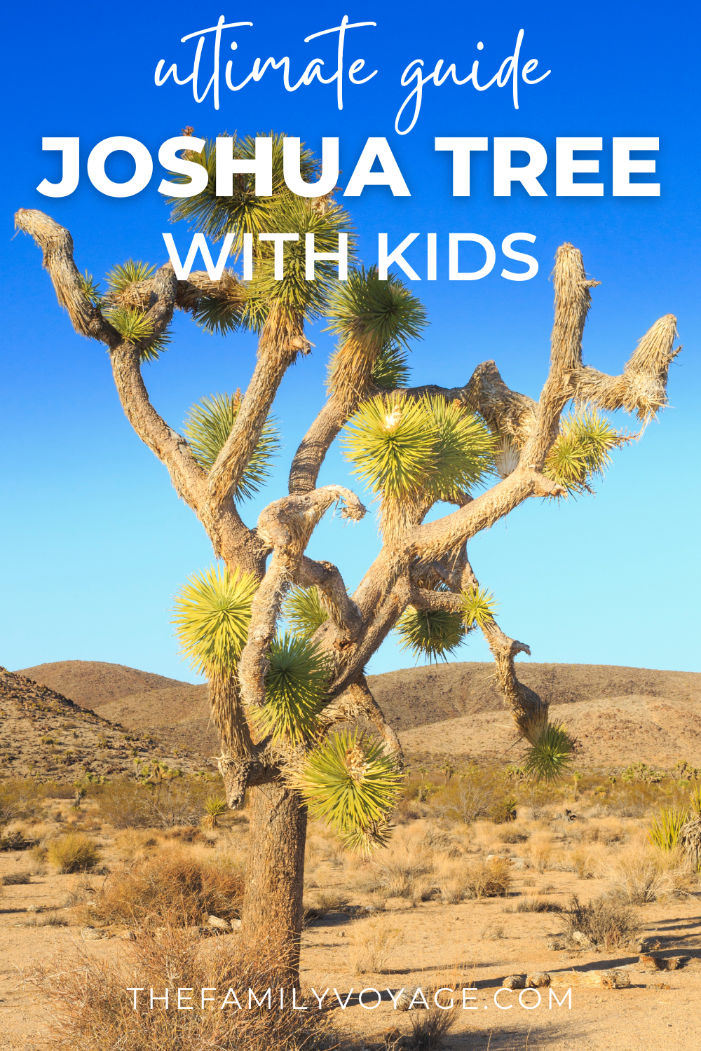 Best Hikes In Joshua Tree National Park Visiting Joshua Tree With Kids In 2021 National Parks Trip Southwest Usa Travel California Travel Road Trips