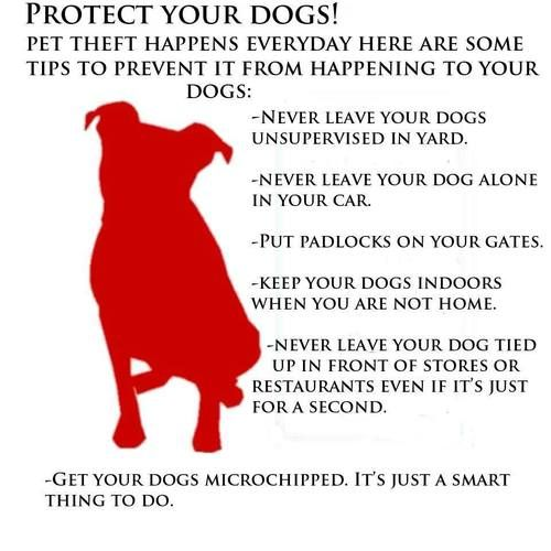 Tips To Keep Your Dogs Safe Animals Dog Safety Pets