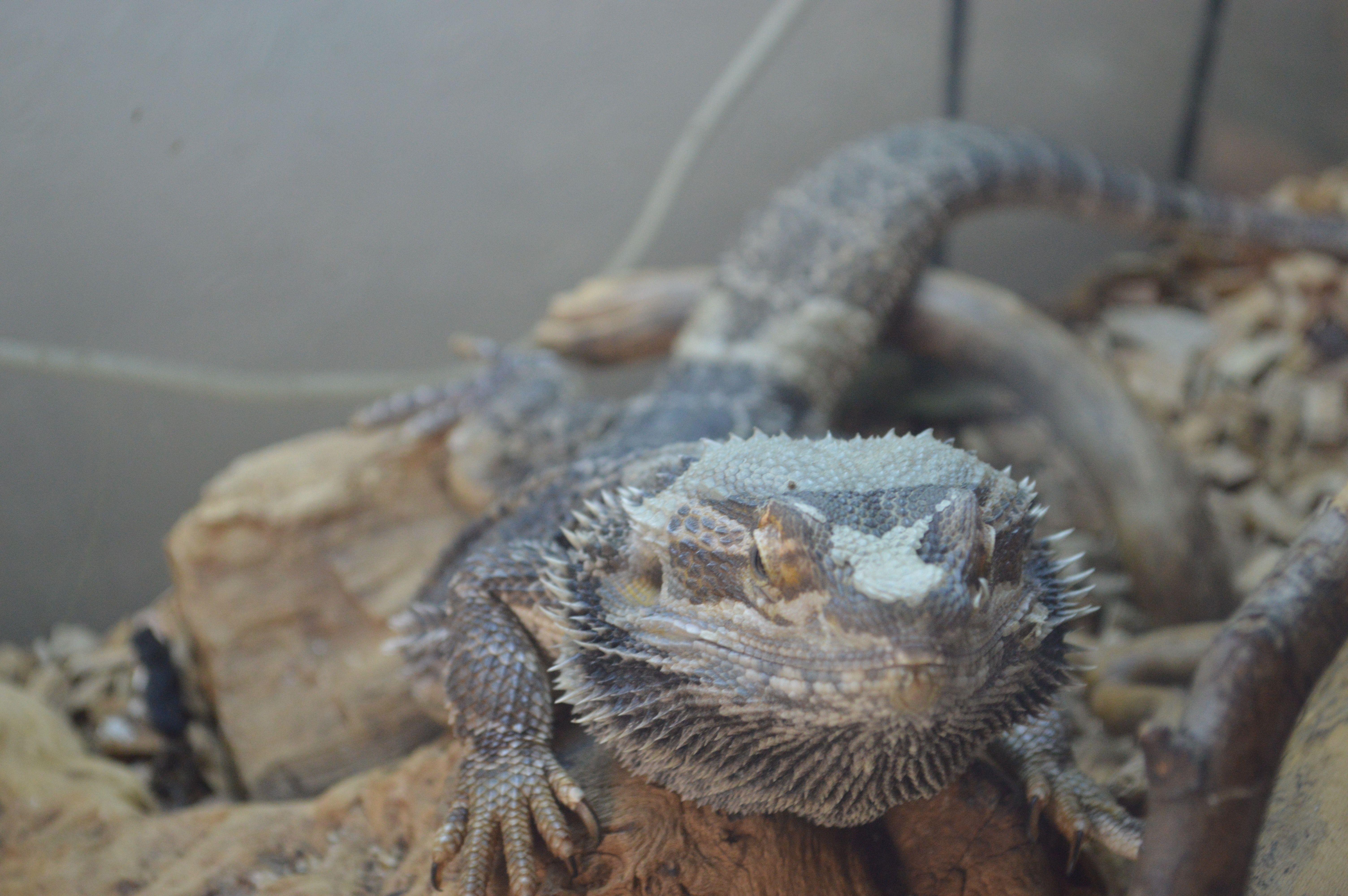 Dragon!!