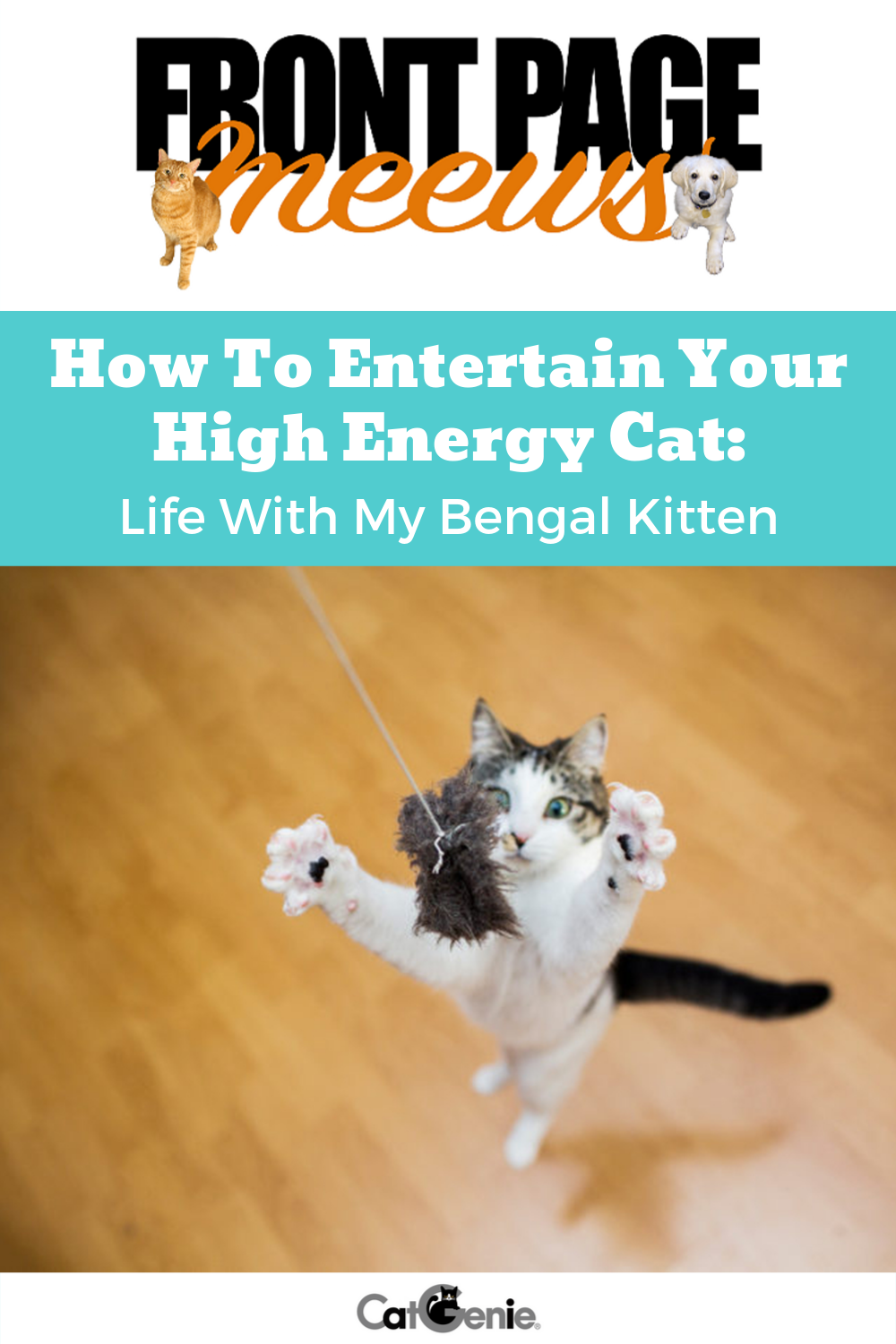 Much Like Human Toddlers Kittens Can Have A Seemingly Endless Supply Of Energy Check Out Our Ideas On How To Help Them Wo High Energy Bengal Kitten Energy
