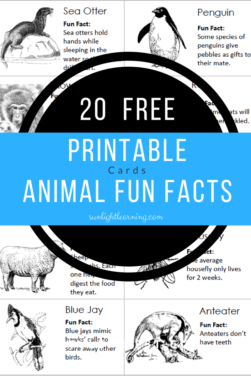 Free Animal Fun Facts Cards Fun facts about animals