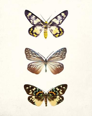 Mariposa | Nature prints, Large poster prints, Photography ...