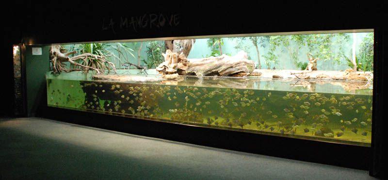 visite de l 39 aquarium pres des sables d 39 olonne fishtanks pinterest. Black Bedroom Furniture Sets. Home Design Ideas