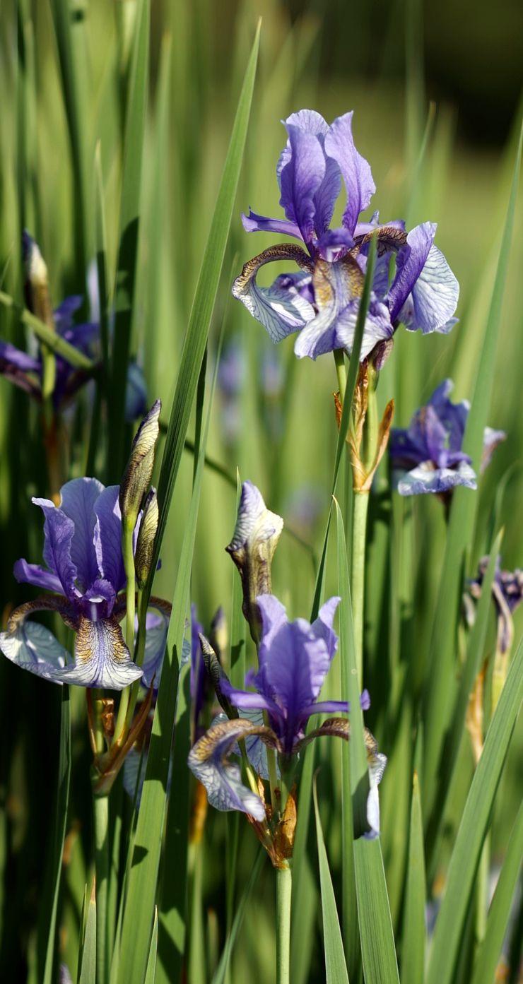 Pflanzen Die Du Nicht Zu Gießen Brauchst Outdoor Projects