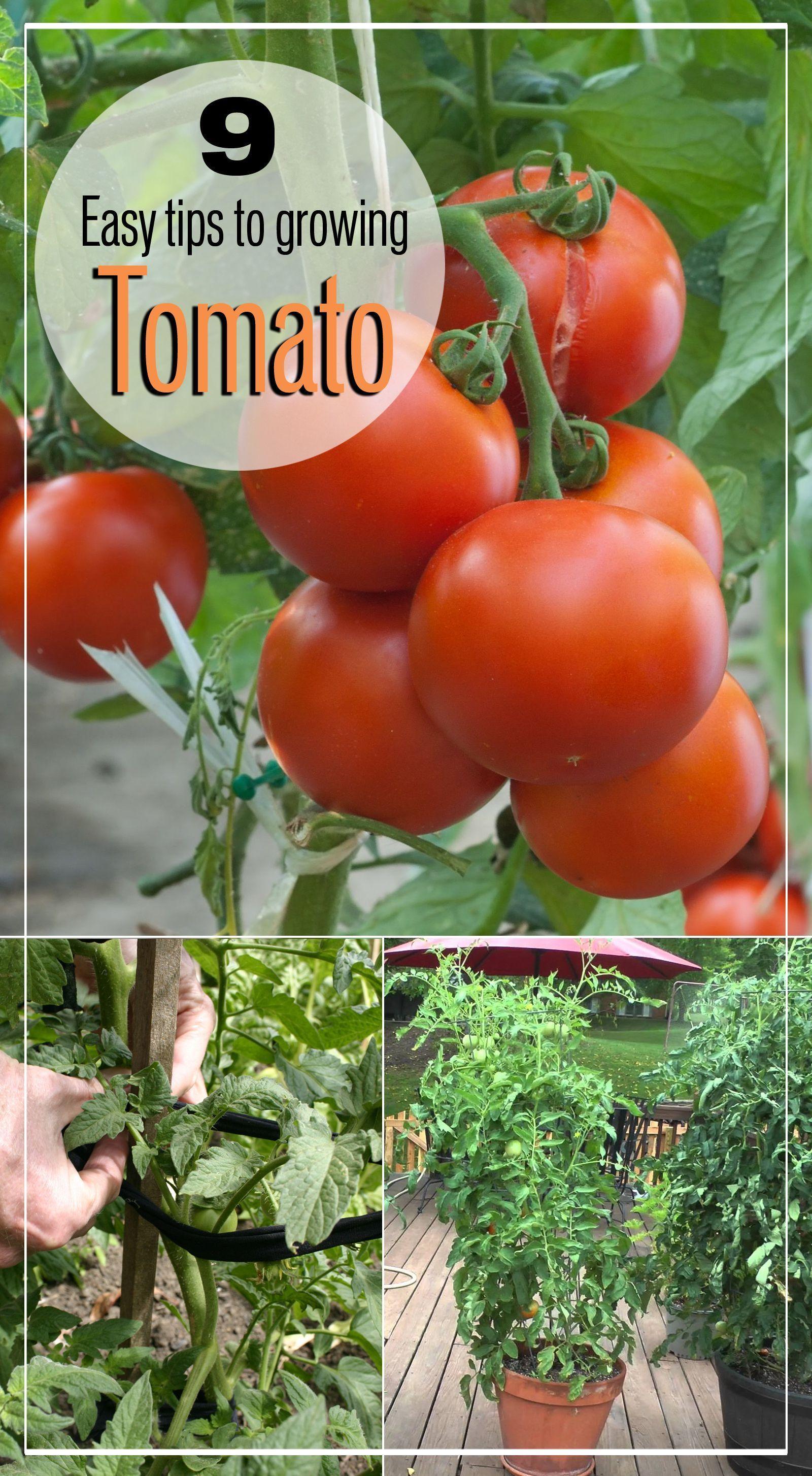 0ef12281bc8ea500210aea1cdba0fc8b - Expert Gardener Organics Vegetable & Tomato Food