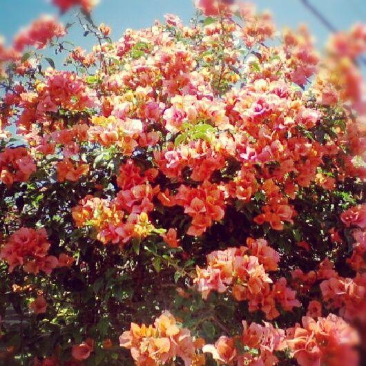 Flores por todos lados. Spring.