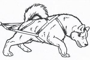 Sled Dog Dog Coloring Page Cute Coloring Pages Dog Sledding
