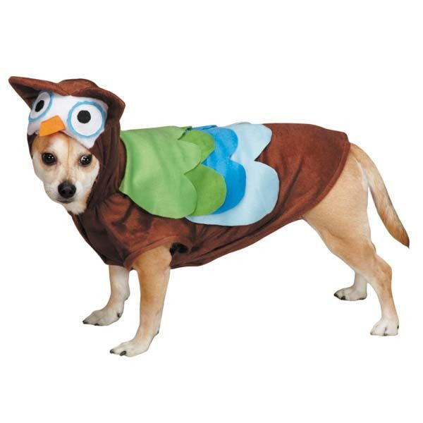 zack u0026 zoey cute hoots owl dog halloween costume pet costumes xsxl zackzoey