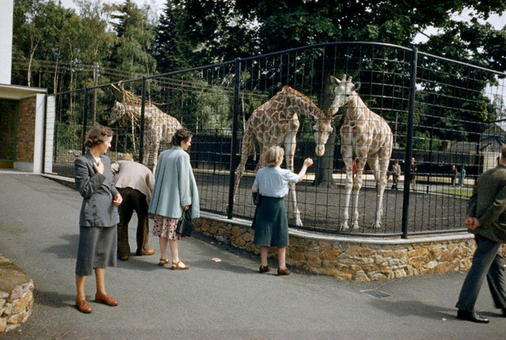 Dublin Zoo 1960s Dublin Zoo Old Photos Republic Of Ireland