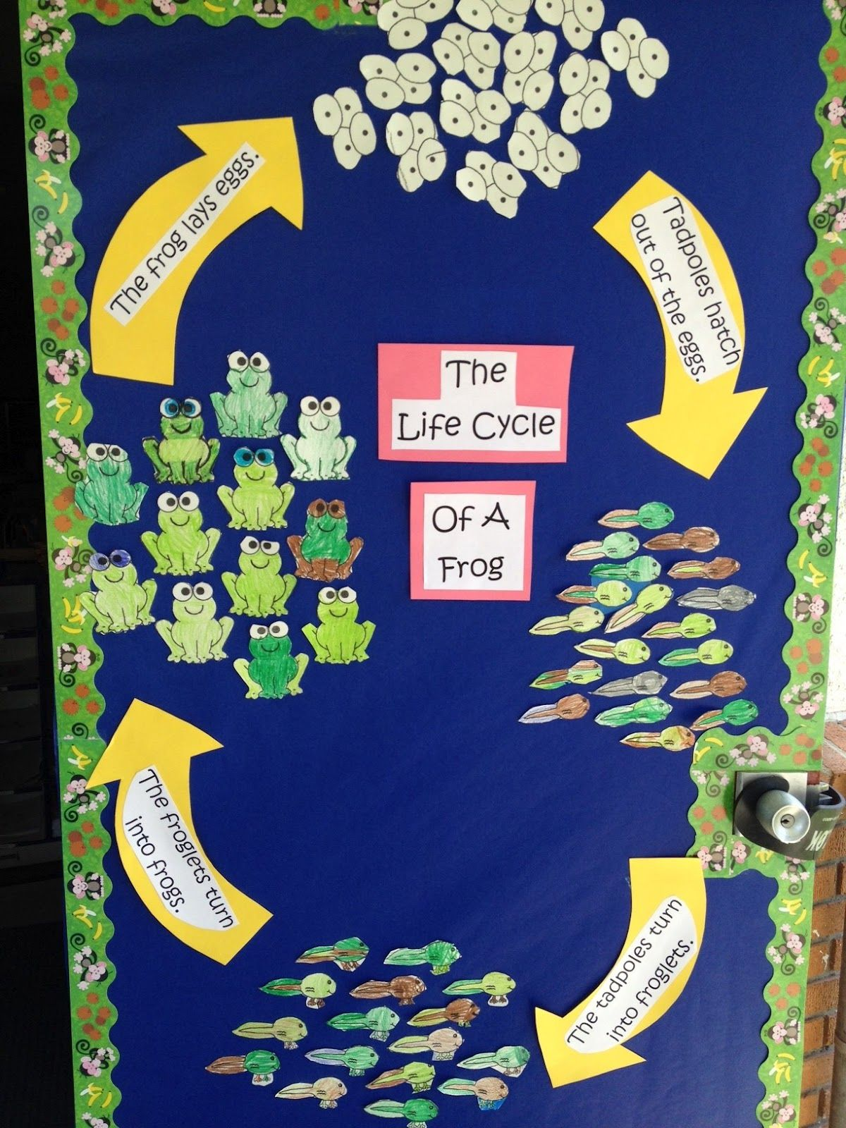 Life Cycle Of A Frog And Adorable Frog Book Great For My